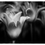 20.05.06.Botanicka.J.032